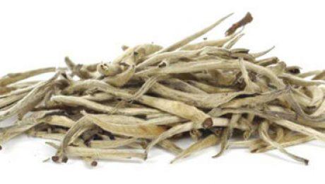Buy Silver Needle White Tea
